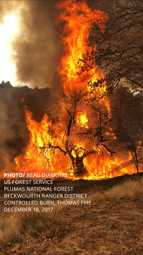 PHOTO/ BEAU DIAMOND US FOREST SERVICE PLUMAS NATIONAL FOREST BECKWOURTH RANGER DISTRICT CONTROLLED BURN, THOMAS FIRE DECEMBER 18, 2017